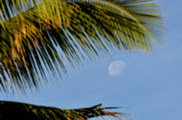 The moon and a palm tree