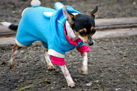 Dog in a Blue Hoody