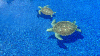 Lazy afternoon - swim in the pool with turtles :)